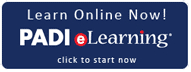 padi elearning, wellington