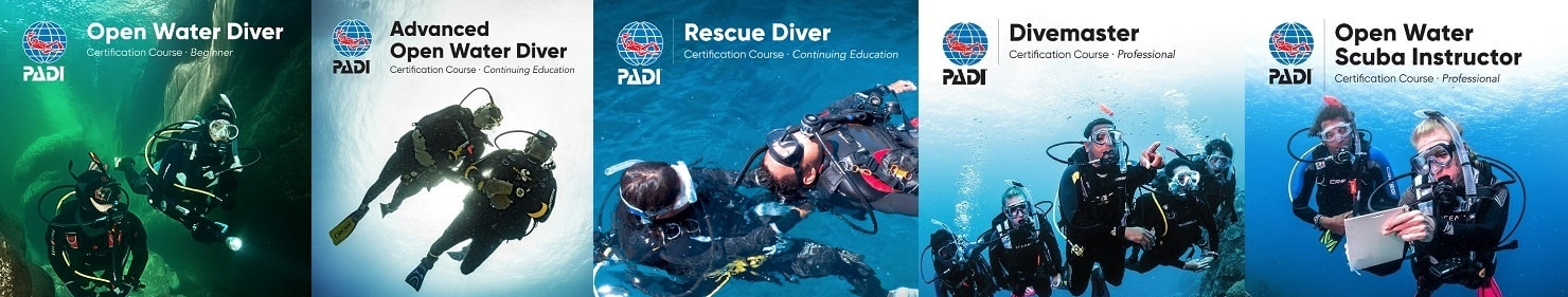 wellington scuba diving courses nz dive course