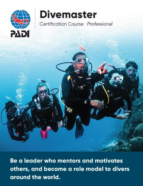 Divemaster certification course Professional