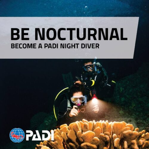 Wellington Scuba Diving-Night Diver