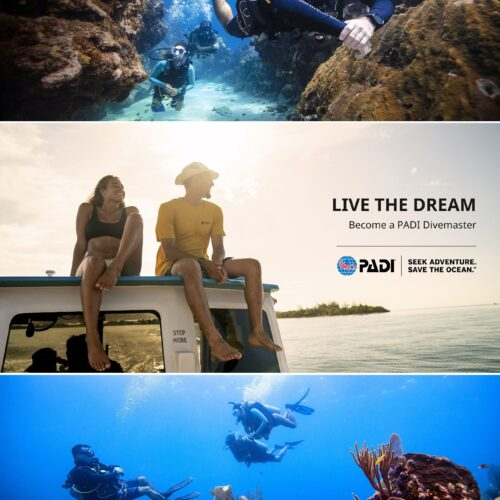 PADI Divemaster Course GoPRO Wellington NZ Dive Instructor leader