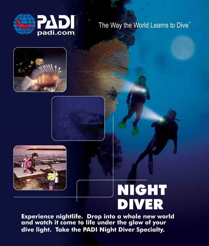 Wellington PADI Night Diving Diver Specialty SCUBA Diving NZ