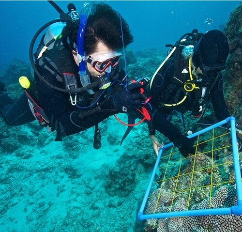 Wellington Research Diver Course PADI Specialty