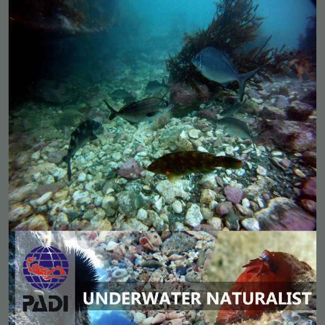 Wellington Underwater Naturalist Specialty PADI NZ