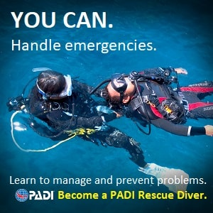 Wellington porirua scuba diving courses padi rescue diver essential nz