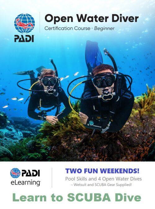 scuba diving course dive lessons wellington padi dive fun
